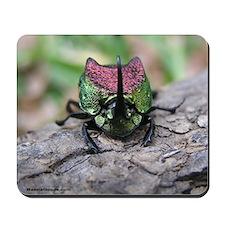 Dung Beetle: Phanaeus difformis Mousepad