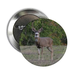 Four Point Buck 2.25