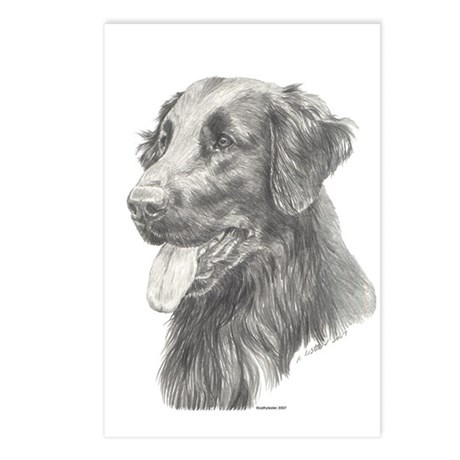 Flat Coated Retriever Postcards (Package of 8)