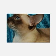 Cute Tonkinese Rectangle Magnet