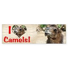 Helaine's Camel Bumper Bumper Sticker