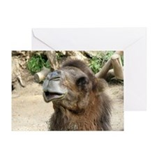 Helaine's Camel Greeting Card