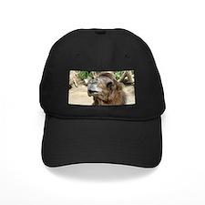 Helaine's Camel Baseball Hat