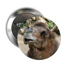 """Helaine's Camel 2.25"""" Button"""