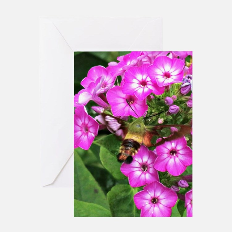 Humming moth on phlox Greeting Card