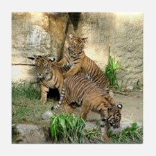 Helaine's Tiger Cubs 2 Tile Coaster