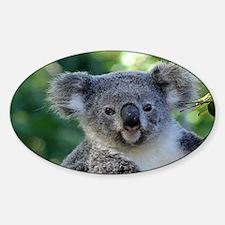 Cute cuddly koala Decal