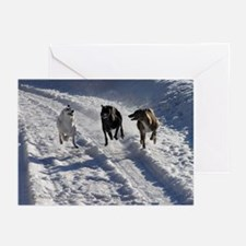 Snowy Greyhound Race Greeting Cards (Pk of 20)