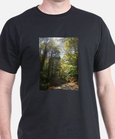 Sun and Trees The Berkshires T-Shirt