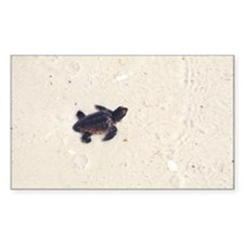 Baby Sea Turtle Rectangle Decal