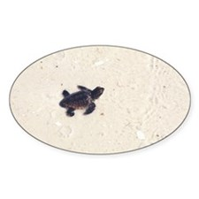 Baby Sea Turtle Oval Decal