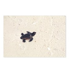 Baby Sea Turtle Postcards (Package of 8)