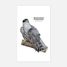 Northern Goshawk Decal