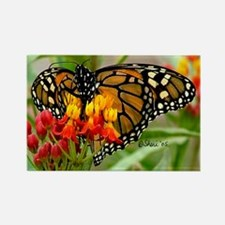 3978 Monarch Butterfly Rectangle Magnet
