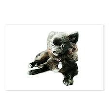Adorable Black Pomeranian Puppy Postcards (Package