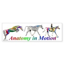 Anatomy in Motion Bumper Car Sticker