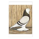 WOE Brown Bar Bald Postcards (Package of 8)