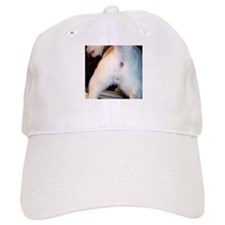 The cat's ass Baseball Cap