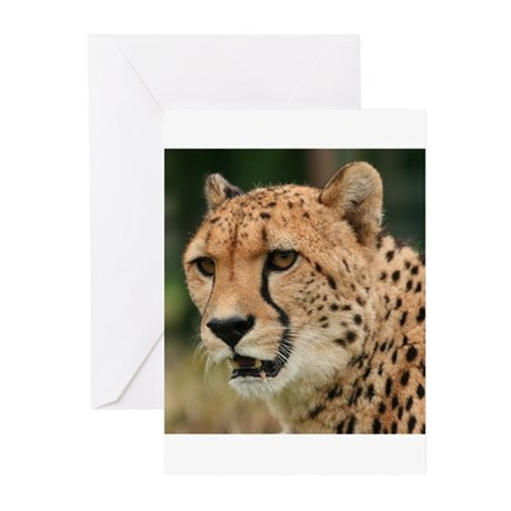 Cheetah Greeting Cards (Pk of 10)