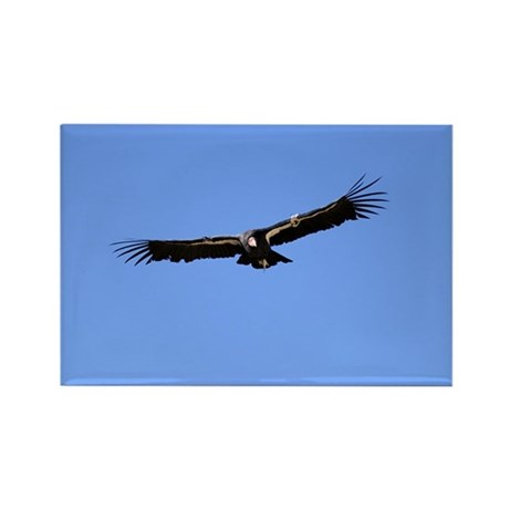 California Condor Rectangle Magnet (10 pack)