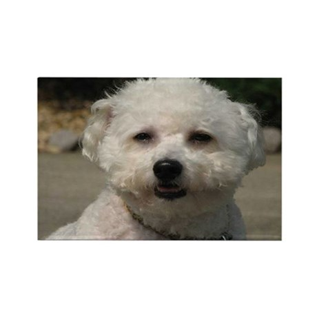 MARCO MAN BICHON RECTANGLE MAGNET (10 PACK)