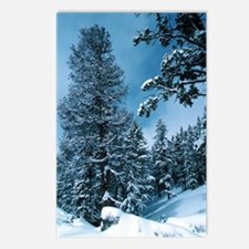 Colorado Blue Postcards (Package of 8)