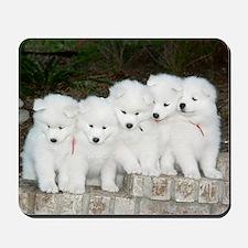 Samoyed Puppies #2 Mousepad
