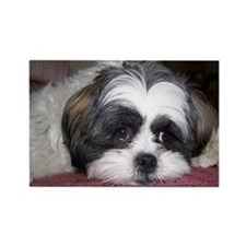 Cute Shih Tzu Dog Rectangle Magnet