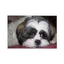 Cute Shih Tzu Dog Rectangle Magnet (10 pack)