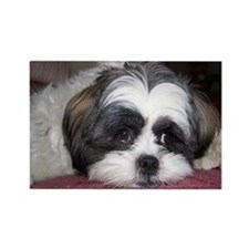 Cute Shih Tzu Dog Rectangle Magnet (100 pack)