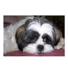 Cute Shih Tzu Dog Postcards (Package of 8)