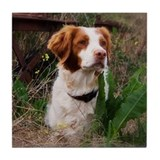 Brittany spaniel Drink Coasters