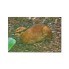 mouse deer Rectangle Magnet