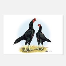 Shamo Rooster and Hen Postcards (Package of 8)