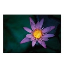 WATER LILLY IN MAURITIUS Postcards (Package of 8)