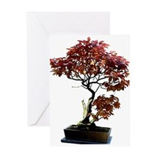 Red Leaf Bonsai Greeting Card