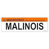 Malinois Single