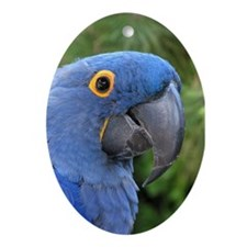 Helaine's Blue Parrot Oval Ornament