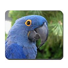 Helaine's Blue Parrot Mousepad