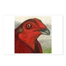 Red Gamecock Postcards (Package of 8)
