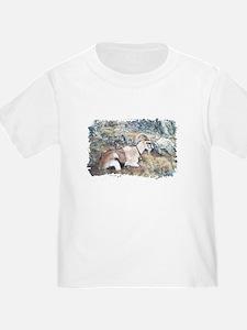 Brown pack-goat, Wyoming T