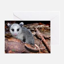 opossum on a log Greeting Card