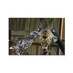 Giraffe Baby Mama Kiss Rectangle Magnet (10 pack)