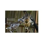 Giraffe Baby Mama Kiss Rectangle Magnet (100 pack)