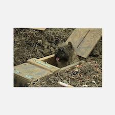 Cairn Terrier Earthdog Rectangle Magnet