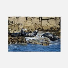 Funny Grey seals Rectangle Magnet