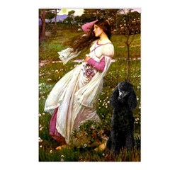 Windflowers / Poodle (BLk-ST) Postcards (Package o