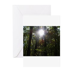 Greeting Cards (Pk of 20) w/ Sun through Trees