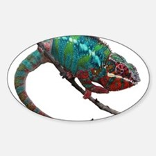 red and blue panther chameleon Decal