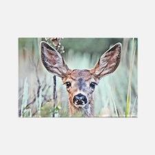 Fawn deer August Rectangle Magnet